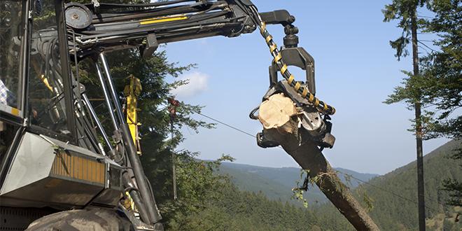Grasas de la industria de la madera